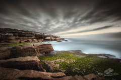 Silky Morning (Bobby Krstanoski - Photography) Tags: animals australia canon canon5dmarkiii canonef1635f28 capebanks cliffs eastcoastaustralia laperouse leebigstopper longeposure nsw ocean outdoor places rocks seascapes summer sunrise newsouthwales