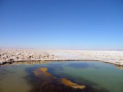 Agua & Sal (Alveart) Tags: chile desierto laguna salar altiplano salardeatacama antofagasta suramerica lagunasaltiplanicas nortegrande nortedechile lagunadechaxa reservanacionallosflamencos alveart luisalveart toconaochile