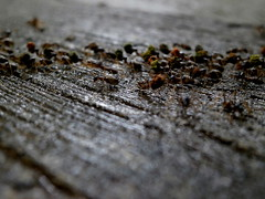 Termites (tord75) Tags: singapore bugs termites singaporebotanicalgarden 2013