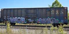 Wasp   -   Levis (INTREPID IMAGES) Tags: street railroad color art train bench graffiti fan paint wasp steel painted sony tracks rail railway trains tags images railcar intrepid writer boxcar graff grab levis freight rolling csx mfk gr8 paintedtrains fr8 csxt benching syw 161424 intrepidimages