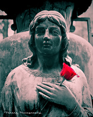 Cemetery love () Tags: usa flower color cemetery graveyard rose statue female america photo image united picture historic neighborhood photograph states maiden selective