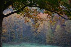 Cherokee Park (Phyllis74) Tags: park autumn fall kentucky louisville cherokeepark
