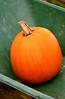 (A Great Capture) Tags: thanksgiving ontario canada fall halloween pumpkin october farm or harvest calabaza wheelbarrow markham zucca lal kuerbis kürbis citrouille kabocha on labu pumpa abóbora 南瓜 ald abobora pompoen カボチャ cucurbita kabak whittamores dynia kaddu pampoen torontophotographer pepon dlaat ash2276 ashleyduffus कद्दू ashleysphotoscom ashleylduffus bhopala puimcin isquotersquash tikba