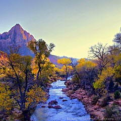 Late Afternoon View of the Virgin River from Footbridge, Zion National Park (lhg_11, 2million views. Thank you!) Tags: river landscape colorful view scenic foliage utha zionnationalpark nationalparkservice nationalparks autmn landscapephotography 100comments northforkvirginriver
