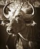 Bufallo, Timbavati (Lea Duckitt) Tags: life africa park travel wild vacation holiday game nature animal southafrica fly bush farm wildlife south lodge safari spots national flies veld hoedspruit krugernationalpark carnivore kruger herbivore bigfive bufallo timbavati bushveld jaydee palaborwa