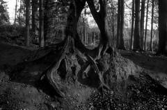 Embrace (Spotmatix) Tags: camera film monochrome landscape effects countryside belgium places olympus villerslaville brabantwallon polypanf zonefocus iso050