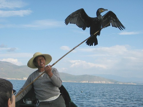 Vanishing Worlds:  The Story of a Lake and a Cormorant Fisherman in Yunnan, China