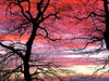 First bright sunrise in a while (Judith North) Tags: