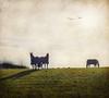 Duster, Robin......& Sadie Too (vesna1962) Tags: england horses field rural countryside scenery yorkshire horizon country memoriesbook artistictresurechest