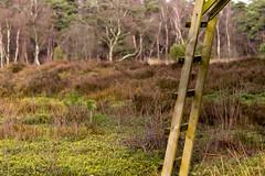 Going up .. .. .. (Borretje76) Tags: nature bomen walk sony natuur sigma boom hut het bos enschede heide wandeling a77 haaksbergen bossen 120400 natuurwandeling lankheet borretje76 slta77v