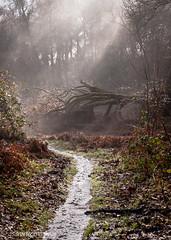 Fog (isawucoming) Tags: morning light sun fog forest canon landscape stream rays damp