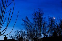 28jan14 crescent moon and venus (Wyld-Katt) Tags: moon venus crescent lunar