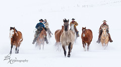 Round up! (betty wiley) Tags: winter horses snow west cowboys wranglers american wyoming mustangs riders