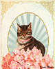 Cat Collage Mixed Media Art (Brooke LeAnne) Tags: pink flowers pet art animal collage illustration digital cat vintage painting colorful acrylic drawing card hydrangea cuteness animalart artprint shabbychic mixedmediaart colorfulart brookeleanne