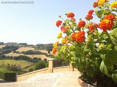 Tranquillit (demartinomartina) Tags: travel flowers blue sea summer flower green nature italia italu traveller pedaso