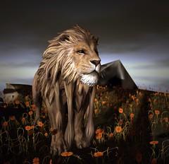 Lion...Mountain