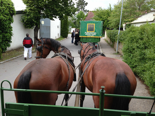 Horse Carriage Ride Illmitz Austria