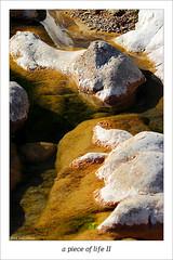 A PIECE OF LIFE II (Tete07) Tags: life water rio river agua vida aigua