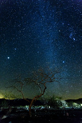 _MG_8219 (Sean Vallely) Tags: nightphotography trees stars deathvalley