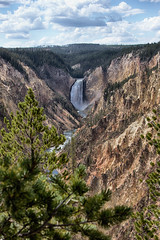 Lower Yellowstone Falls 2131 (casch52) Tags: yellowstone park canyon waterfall river national wyoming lower landscape nature usa water forest scenic wilderness america falls beautiful grand overlook outdoors mountains trees valley fall rocky pine erosion view yellow nationalpark tourism travel states mist rocks united rock beauty point wy colorful summer cliff vertical green artist wild flowing rugged 24105f4lcanon7d