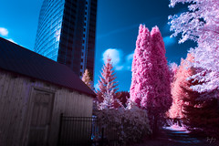 Two Worlds Collide (jrseikaly) Tags: gatineau qubec canada ca quebec multicolor infrared ir photo photoshop jack seikaly jrseikaly photography art building architecture nature cabin house wooden urban tree trees surreal