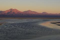 Laguna Chaxa (Mono Andes) Tags: andes chile regindeantofagasta volcntumisa salardeatacama laguna lagunachaxa reservanacionallosflamencos altiplano salar atardecer volcn volcano volcanoe