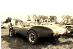 Cobra Rep 1 sepia (Torquemada1965) Tags: arden cobra