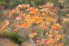 Carso d'Autunno (aluisell) Tags: carso colors fiori friuli landscape natura nature paesaggio piante
