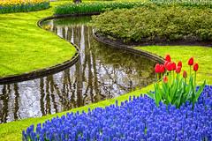 RGB (mirsavio) Tags: red holland keukenhof spring tulips blossom colors curves reflections green blue