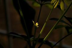 IMG_0008_2 Kitchen Sunrise (oldimageshoppe) Tags: houseplant kitchenwindow earlymorningsun fall