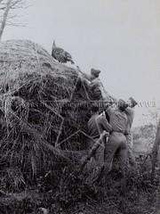 Thanksgiving 1943, the USMC catching turkeys (G.I.N.I) Tags: usmc usmarines marines beechhill derry londonderry countylondonderry thanksgiving 1943