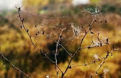 * (PattyK.) Tags: ioannina giannena giannina epirus ipiros november 2016 whereilive autumn nature amateurphotographer nikond3100 web greece balkans griechenland hella ellada ιωάννινα γιάννενα ελλάδα ήπειροσ βαλκάνια ιστόσ αράχνη φύση φθινόπωρο νοέμβριοσ