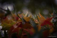 Hallazgo (AvideCai) Tags: avidecai 50mm hojas otoo parque