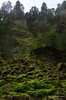 Columnar Basalt crown (Xipitipix) Tags: wahclellafalls columbiarivergorge pacificnorthwest oregon november gorge tannercreek water moss