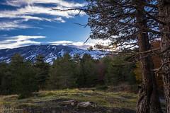 ....y al fondo el Etna (allabar8769) Tags: etna italia montaa otoo paisaje sicilia vegetacin volcn rboles ngc nwn