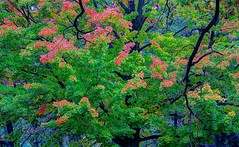 Autumn reach (Bobby Mou) Tags: fall autumn color trees leaves graphic art hdr