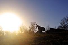 Shadow horse (L Hughesy) Tags: shadow horse stable sun sky