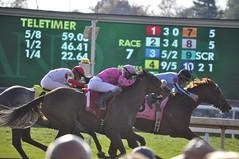 _DSC0121 (John.Nash) Tags: keeneland throroughbred jockeys horses horseracing lexington kentucky