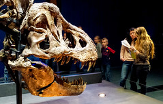 20161206_120423 (durr-architect) Tags: tyrannosaurus rex trex town skeleton naturalis nature museum leiden exhibition fossil consevation carnivorous dinosaur montana black hills institute