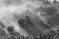 Rayos de luz (Ricard Snchez Gadea) Tags: planadevic osona canon catalunya canonistas catalua catalonia 6d 6dcanon 6deos eos6d canon6d canoneos6d sigma sigma150600mmf563dgoshsmcontemporary 150600 sigma150600 amanecer sortidadesol sunrise boira boirabaixa boirina niebla fog textura nube airelibre