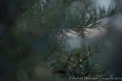 Ochtend dauw / Morning dew (Andr Hulsbergen) Tags: natuur nature dauw dew ochtend morning druppel druppels drop drops waterdrop waterdruppel
