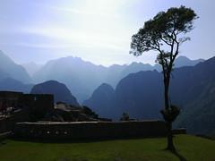 Inca tree (O.Ped) Tags: perarequipascatalinaconventblue machu picchu tree mountain