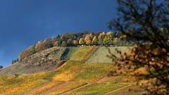 Herbst (Rolfmundi) Tags: weinberg kleinheppach bume herbst