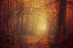 Autumn Serenade (Zsolt Zsigmond) Tags: forest trees woods autumn fall fog mist light foliage leaves colours nature landscape nikon d5100 sigma exposure serene ambienece path way walk trail outdoor