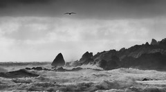 she says there are places shed much rather be (Keith Midson) Tags: trialharbour tasmania coastline coastal tern bird coast ocean sea storm waves water rocks rough seas oceans clouds cloud australia rugged stormy weather