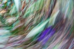 Motion blur. (n_nellis) Tags: motion blur field medow grass flowers