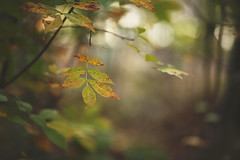 Before you were gone (Tammy Schild) Tags: leaves branch forest woods nature foliage autumn fall season october plants trees