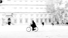 P3930210 Lucca  Impressioni  autunnali !! (gpaolini50) Tags: lucca bw biancoenero bianconero blackandwhite photoaday photography photographis photographic photo phothograpia emotive esplora explore explored emozioni explora e
