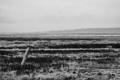 Tidal Flats at Boundary Bay in the Rain 2 (LongInt57) Tags: landscape scenic tidal flats post wood water ocean pacific boundarybay raining bw monochrome black white grey gray delta bc canada vancouver