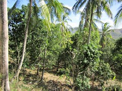 GREEN AND GO (PINOY PHOTOGRAPHER) Tags: mati city davao oriental coconut tree sur mindanao philippines asia world